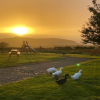Beautiful sunset and our lovely ducks
