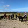 Learn about our alpacas when you join a trek (pre-booking advised)